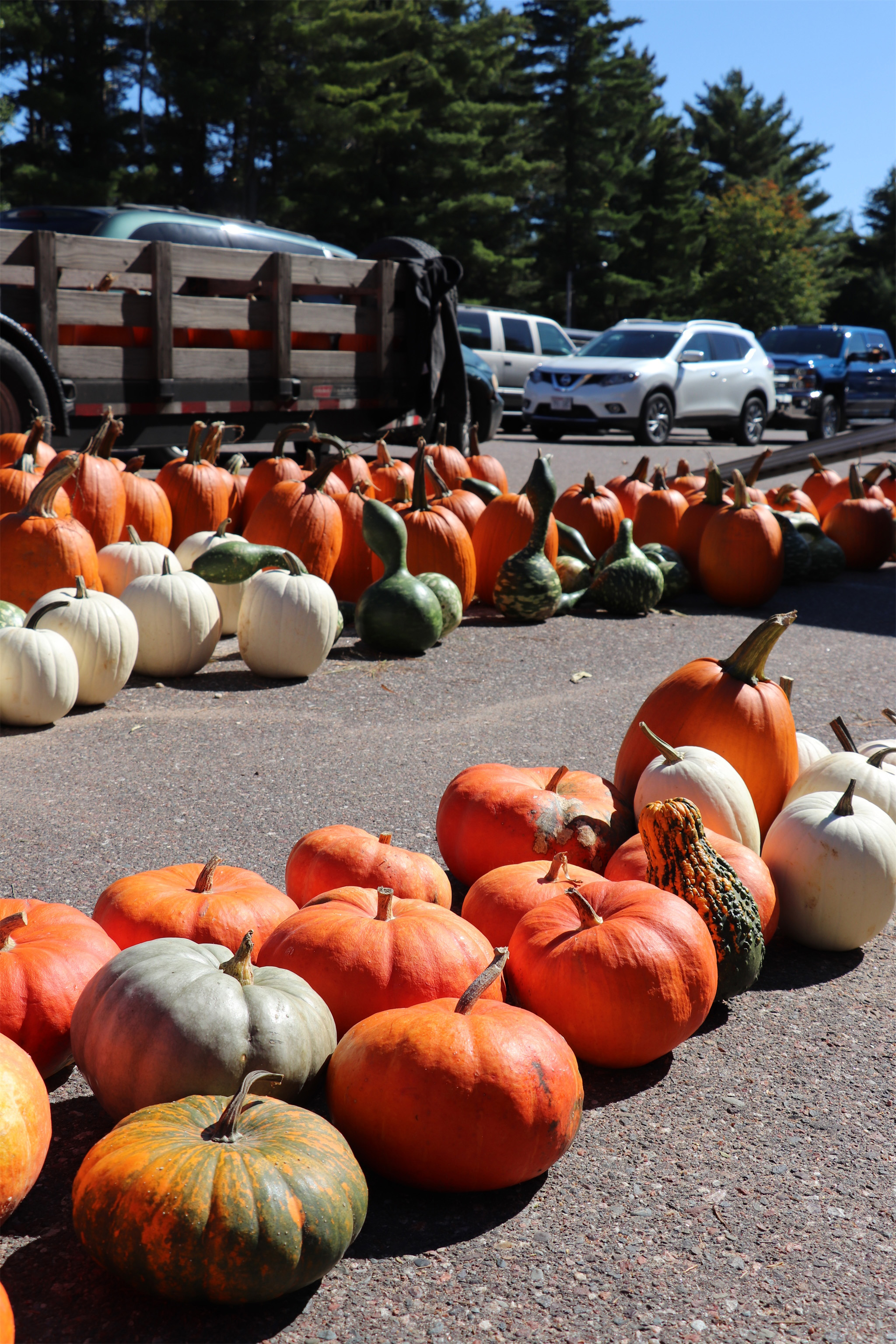 Bright orange pumpkins line the parking lot at Colorama in St. Germain. Kim Johnson photo