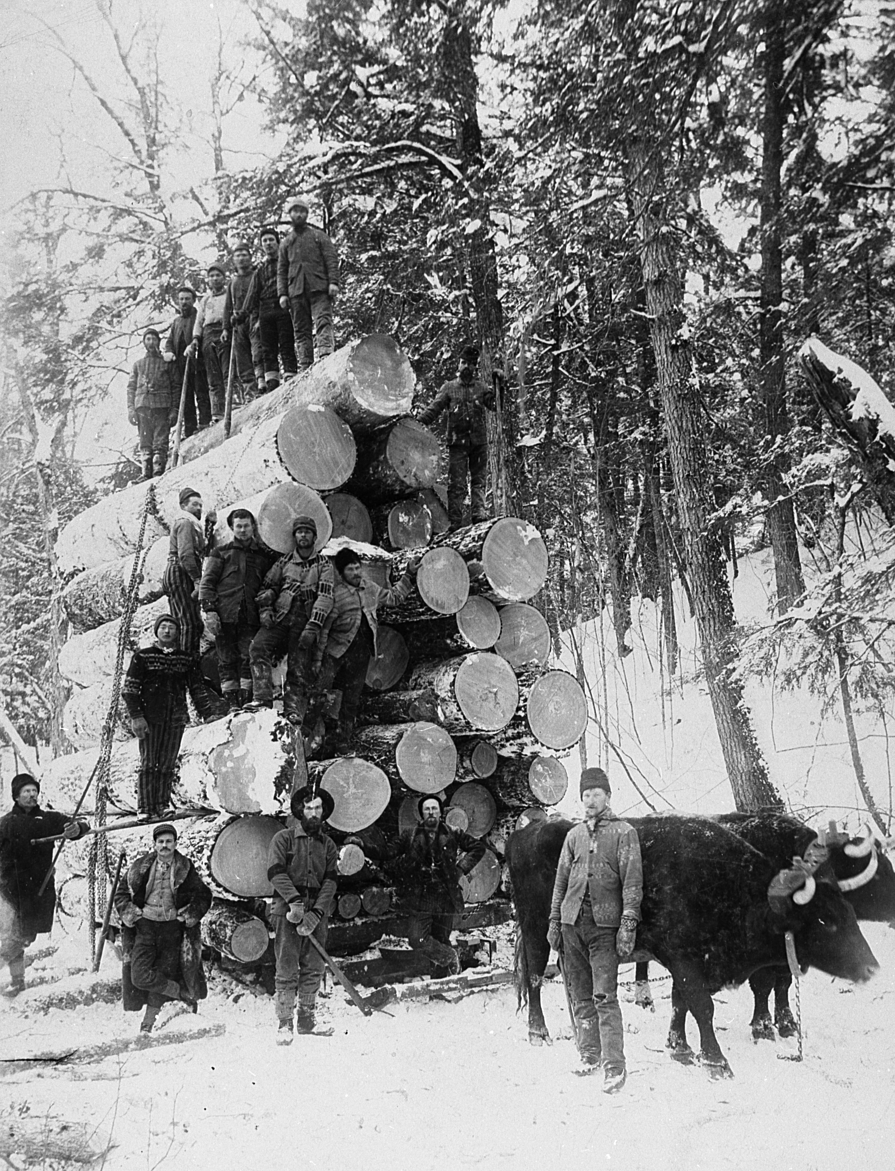 A bragging load for the Brooks and Ross Lumber Co. in Arbor Vitae. Courtesy of Minocqua Museum
