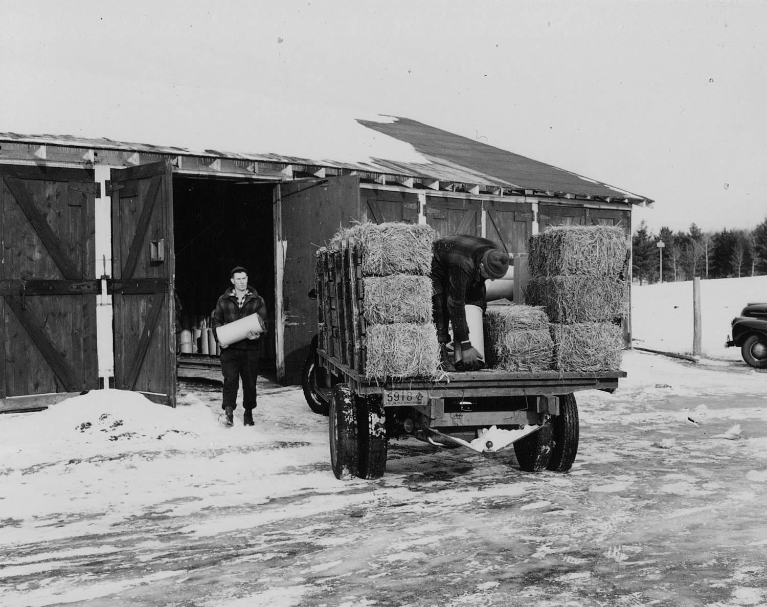 Loading state truck with baled hay, concentrate and corn, preparatory to transporting food to deer feeding station at White Sand Lake. Photo dated 1944. Wisconsin Department of Natural Resources photo
