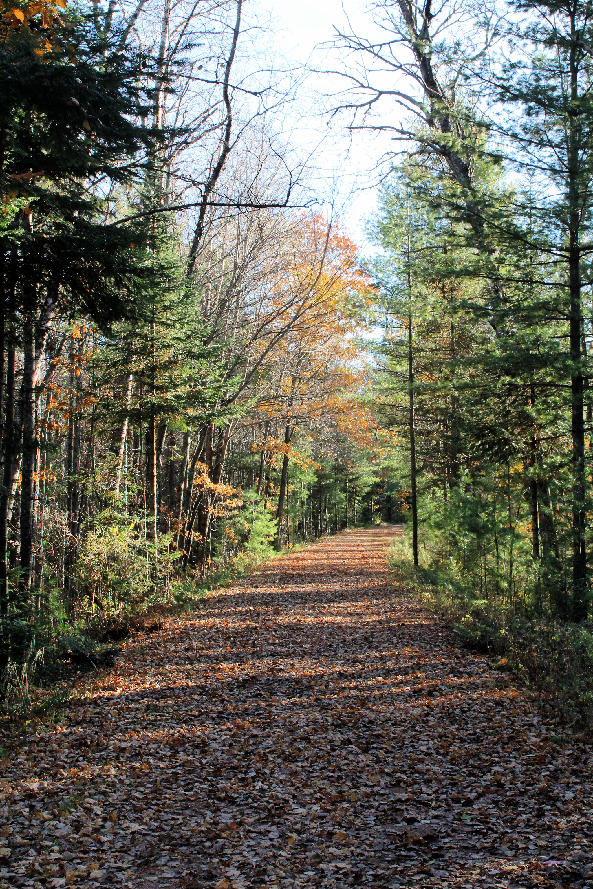 The Bearskin Trail is covered with leaves on this fall afternoon in Hazelhurst. Kim Johnson photo