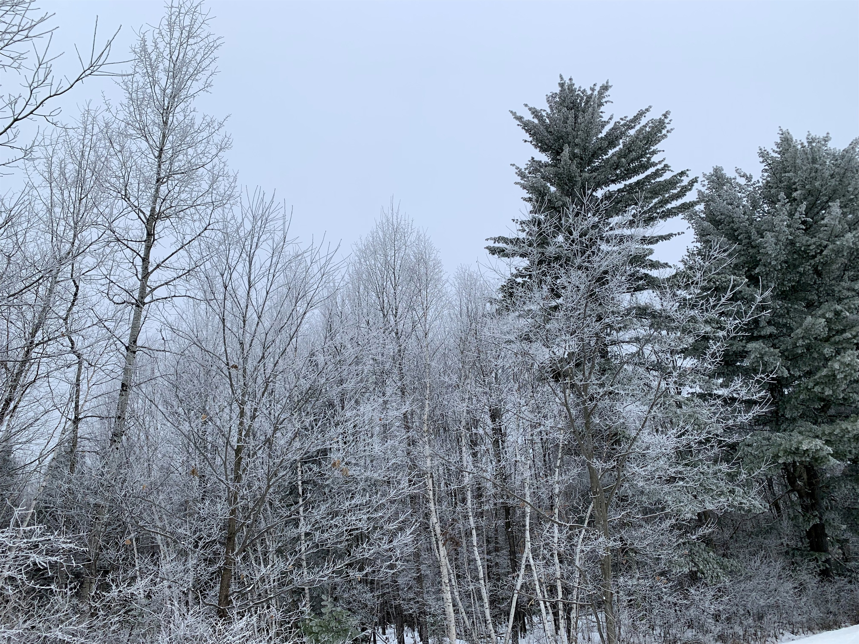 Sparkling frosty tree tops in Hazelhurst. Kim Johnson photo
