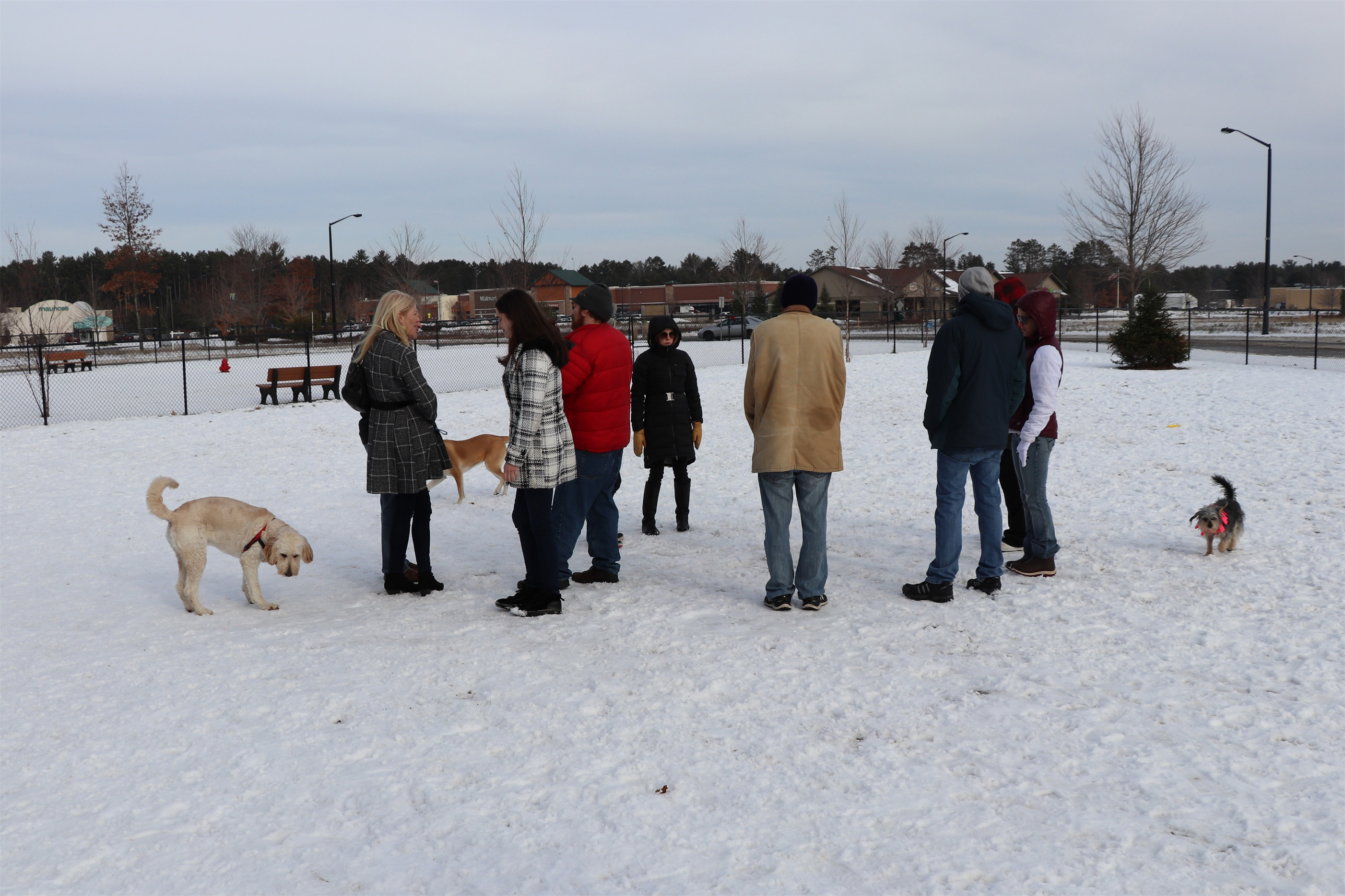 It's a busy afternoon at the Lakeland Area Dog Park in Minocqua. Kim Johnson photo