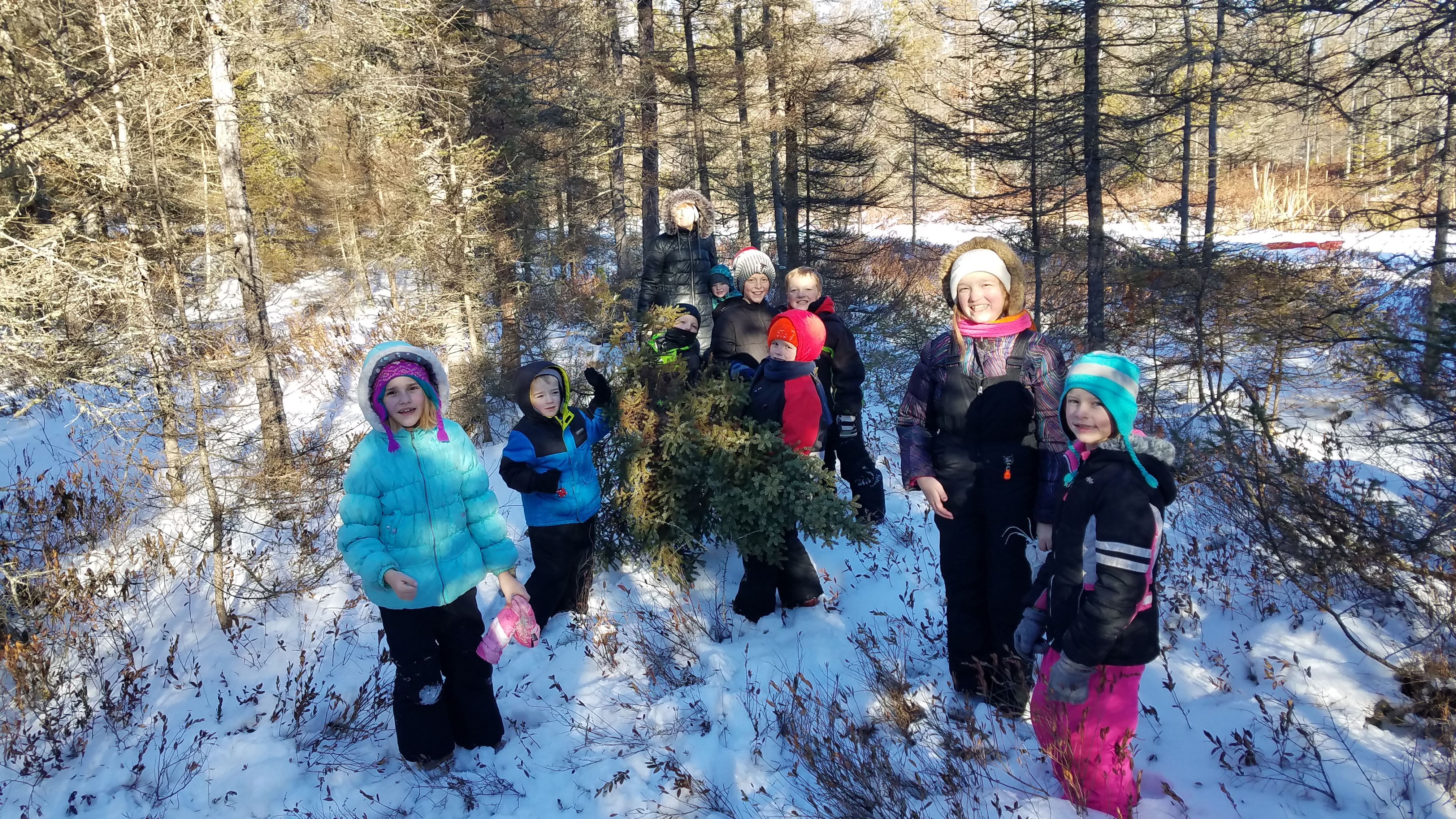 Looking for the perfect Christmas tree in the Lake Tomahawk area. Submitted photo