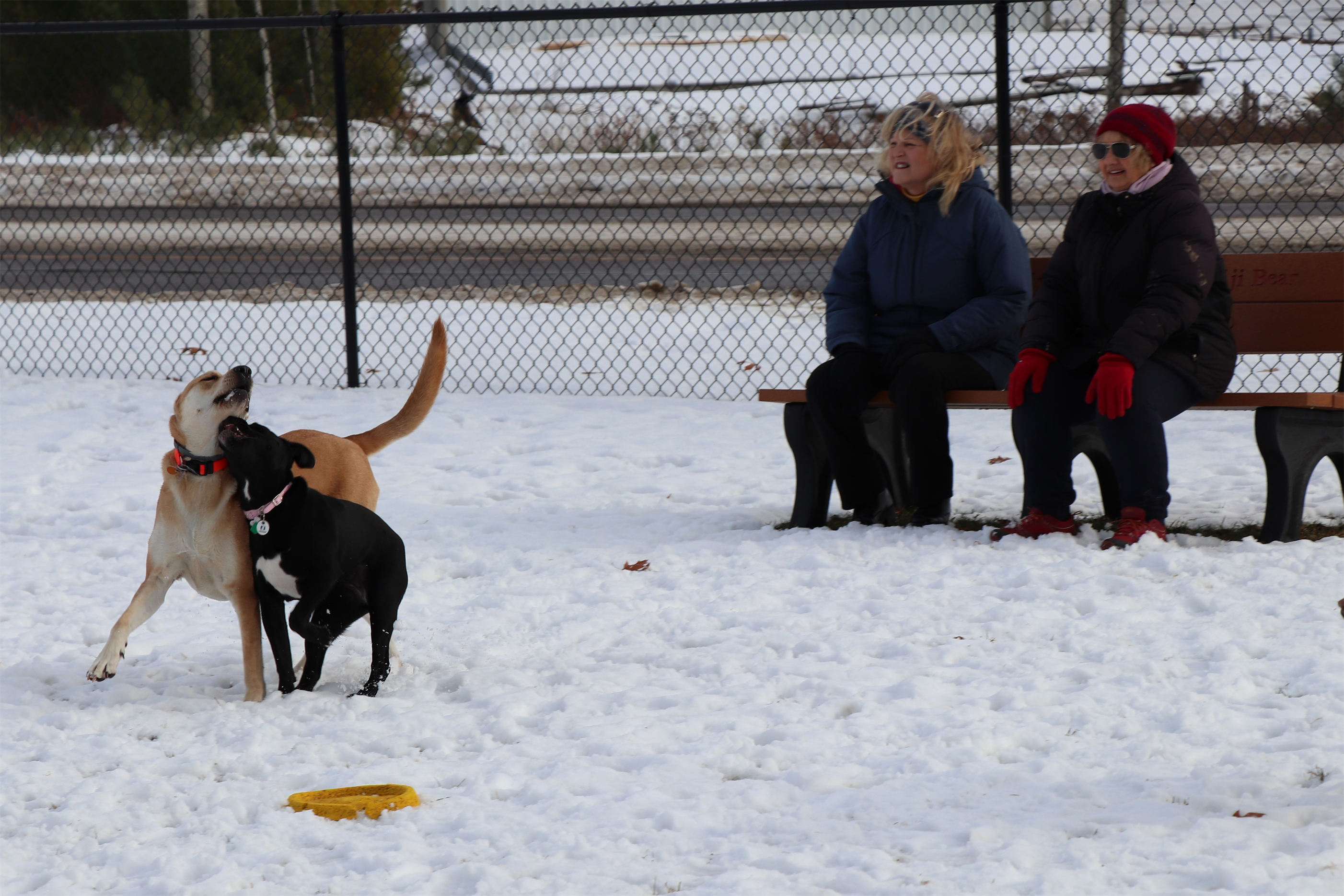 It's a perfect afternoon for playing outside at the dog park in Minocqua. Kim Johnson photo
