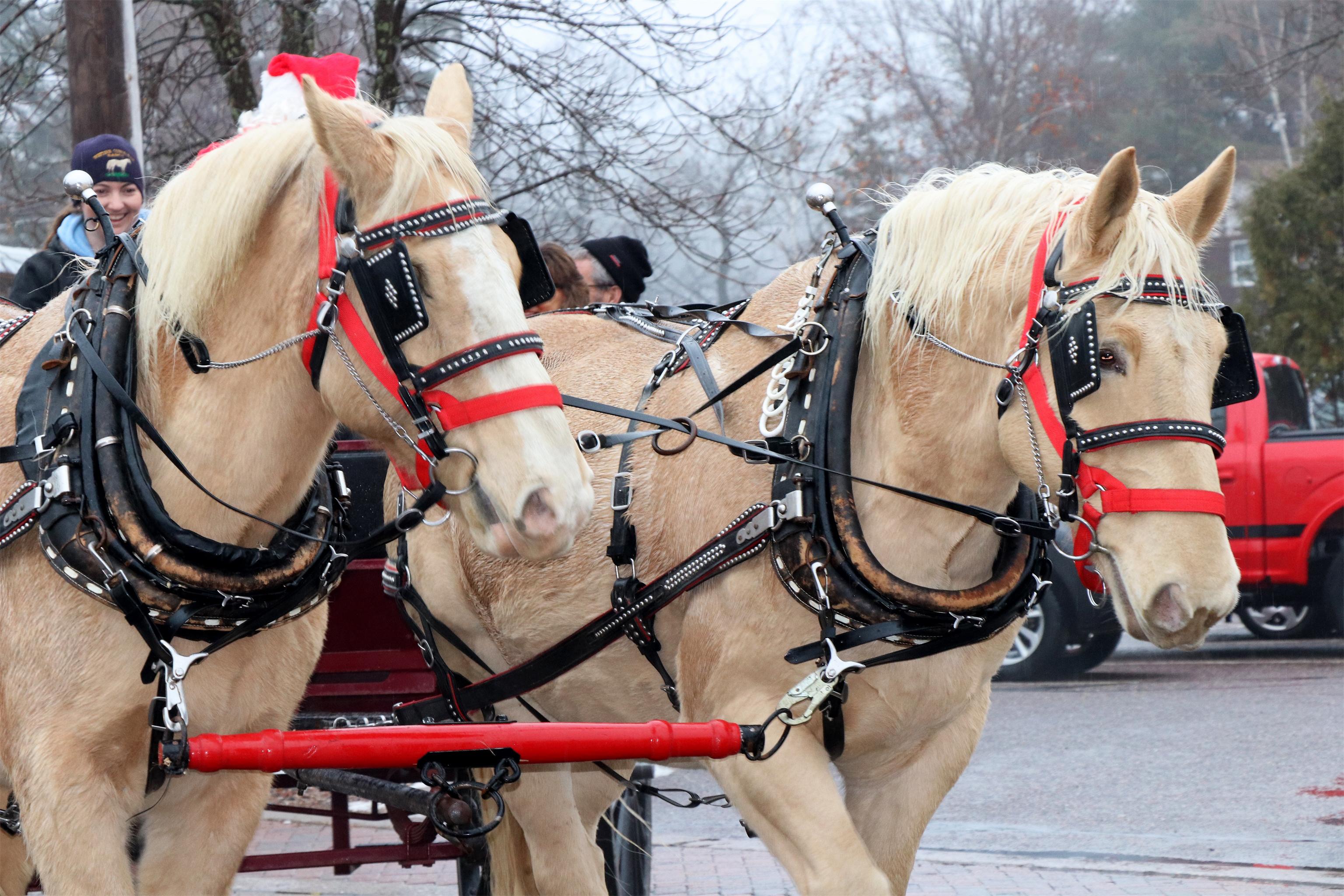 Beautiful horses pull a wagon in downtown Minocqua. Kim Johnson photo