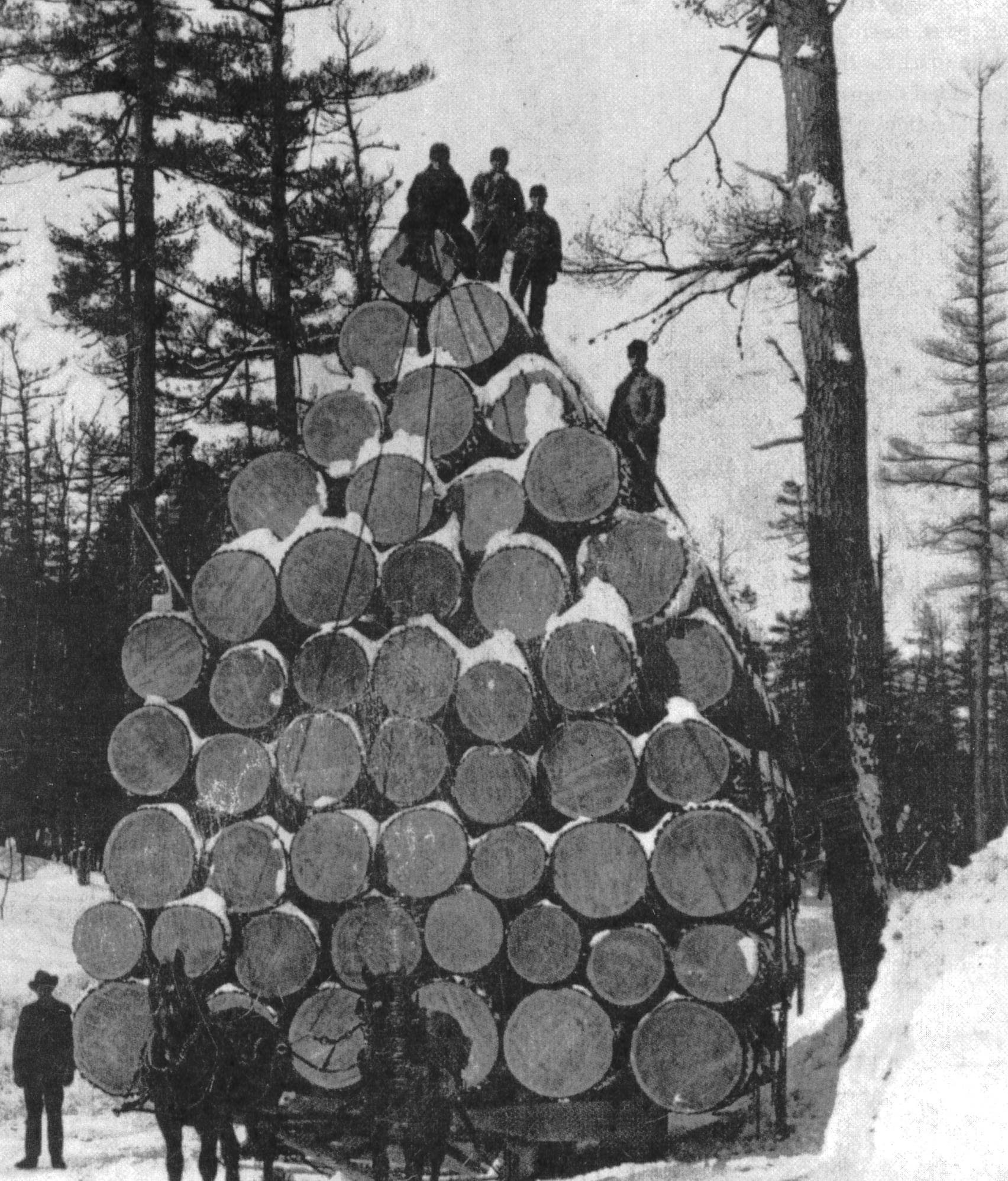 The largest load of logs ever hauled by one team of horses, this sleighful stood over 31 feet high and weighed 144 tons. Nine railroad cars were used to ship these logs to the 1893 Chicago World's Fair. Courtesy of Boulder Junction Area Historical Society